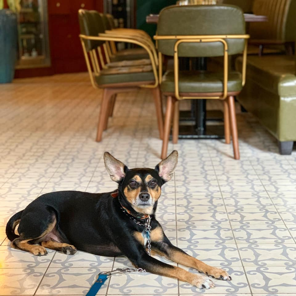 All spaces in La Concordia Hotel are pet friendly