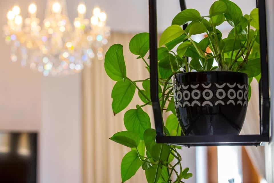 Decoración de plantas en una de las habitaciones de La Concordia Boutique Hotel